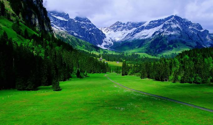 Beautiful Trees & Alps Mountain Image