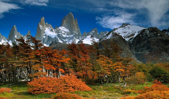 Greenery, Trees, Fitzroy Mountain Image