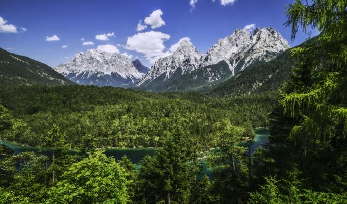 Lovely Green Trees & Mountain Image